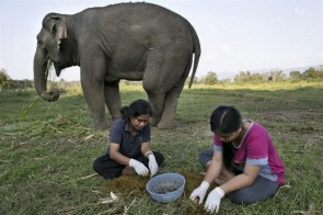 Elephant-Dung-Coffee-02-634x422[1]