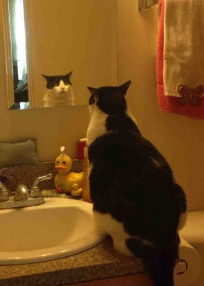 Cat with an identity crisis.