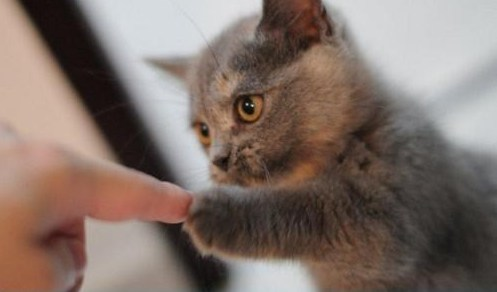 Kitty, Fist Bump