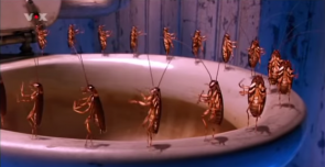 Cockroaches don't pee.