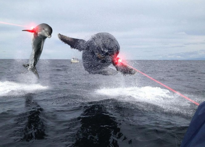 laser dolphins attack lol