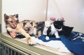 A mother cat walked through flames five times to save her kittens from a fire.