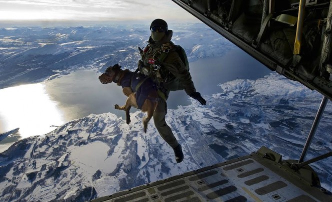 Austrian Special Forces and Malinois sky dive