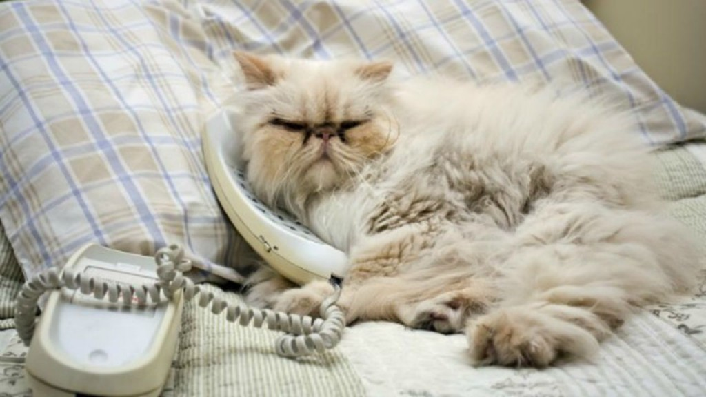 128964-849x565r2-Kitty-on-the-phone