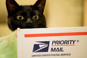 priority_mail_box_cat_ii_by_gogogodzirra