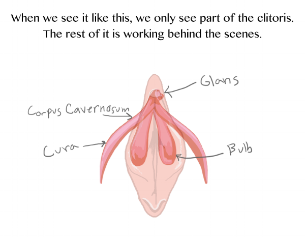 Clitoris+Vulva+Diagram+2
