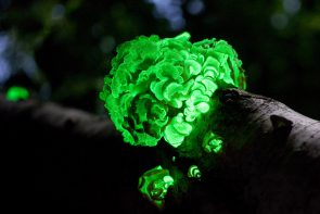 Plants that Glow are now a Reality