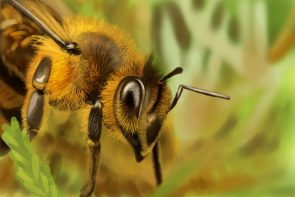 Bees Are Impressive, Intelligent, and Important